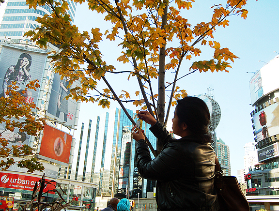 Hanging another necklace up on a tree in Dundas Square, Toronto.